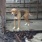 Did you lose a beagle? UPDATE